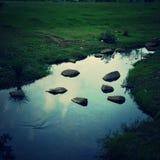 碧山公园新加坡 免版税图库摄影