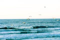 碰撞的蓝色波浪和海鸥沿海佛罗里达海滩在庞塞进和奥蒙德海滩,佛罗里达 免版税库存照片
