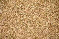 碾碎干小麦干麦子 免版税库存图片