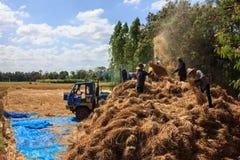 碾碎的米 免版税图库摄影