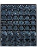 磁反应想象人脑MRI医疗诊断的 库存照片