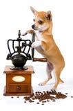 磨咖啡器小狗 免版税库存图片