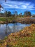 磨房森林池塘 库存图片