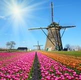 磨房风和郁金香美妙的风景在晴朗的荷兰 库存照片