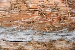 磨损的木日志纹理细节 免版税库存照片