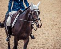 磨练驯马穿戴的骑马形式比赛马女骑士图象奥林匹克可实现的体育运动 黑马画象在驯马竞争时 图库摄影