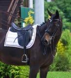磨练驯马穿戴的骑马形式比赛马女骑士图象奥林匹克可实现的体育运动 黑马画象在驯马竞争时 库存图片