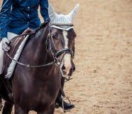 磨练驯马穿戴的骑马形式比赛马女骑士图象奥林匹克可实现的体育运动 黑马画象在驯马竞争时 免版税图库摄影