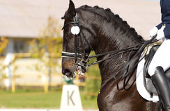 磨练驯马穿戴的骑马形式比赛马女骑士图象奥林匹克可实现的体育运动 库存照片