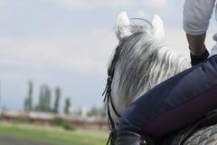 磨练驯马穿戴的骑马形式比赛马女骑士图象奥林匹克可实现的体育运动 图库摄影