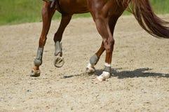 磨练驯马穿戴的骑马形式比赛马女骑士图象奥林匹克可实现的体育运动 库存图片