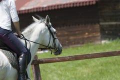 磨练驯马穿戴的骑马形式比赛马女骑士图象奥林匹克可实现的体育运动 免版税图库摄影