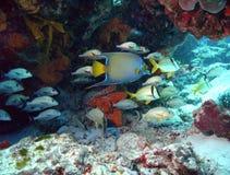 礁石业务量 免版税库存图片