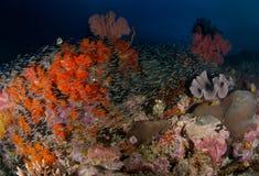 礁石场面 免版税库存图片