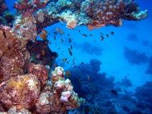 礁石场面 库存照片