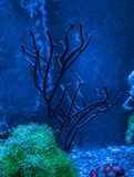礁石坦克海军陆战队员水族馆 充分蓝色水族馆植物 免版税图库摄影