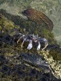 礁石敌手 库存照片