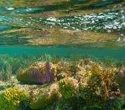 礁石热带水中 图库摄影