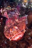 礁石的加利福尼亚Cabazon 库存照片