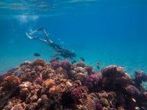 礁石的自由的潜水者 库存照片