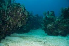 礁石谷 免版税库存图片