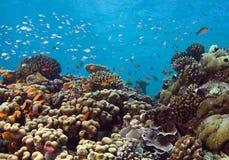 礁石顶层 免版税库存图片