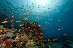 礁石风景水下的yolanda 免版税库存图片