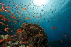 礁石风景水下的yolanda 图库摄影