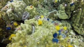 礁石 影视素材