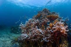 礁石 图库摄影