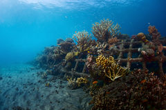 礁石 免版税图库摄影