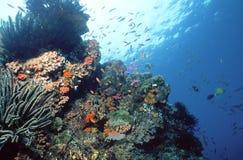 礁石solomon 库存图片