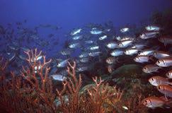 礁石squirell 免版税库存照片