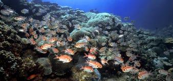 礁石squirell 免版税库存图片