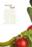 示例蔬菜 向量例证