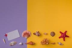 礼品券,在拷贝空间的贝壳 库存照片