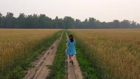 礼服的一少女沿麦田走 清早,轻的雾 股票视频