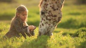 礼服的女孩坐草饲料一匹马,在减速火箭的样式慢动作 影视素材