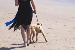 黑礼服的妇女带领在皮带的狗在海滩 免版税库存照片