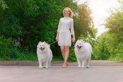 礼服的美丽的年轻白肤金发的女孩走与两条白色蓬松狗的在夏天庭院里 免版税库存图片
