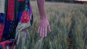 礼服的美女走在通过领域的接触麦子耳朵在日落 股票视频