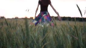 礼服的美女走在通过领域的接触麦子耳朵在日落 股票录像