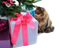 礼物盒和猫 免版税库存照片