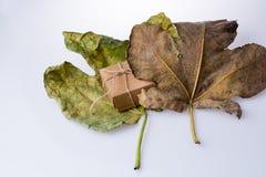 礼物盒在一片大干燥叶子的棕色颜色 库存图片