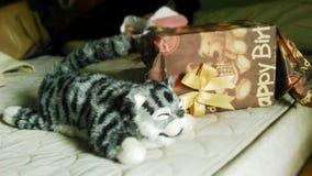 从礼物盒的猫 免版税库存照片