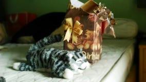 从礼物盒的猫 库存图片