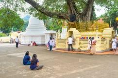 祈祷在寺庙 免版税图库摄影