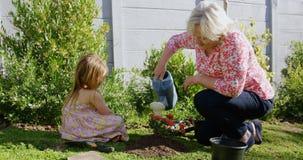 祖母和孙女水厂在庭院里 股票录像