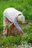 祖母在庭院里撕毁一棵草 免版税库存图片
