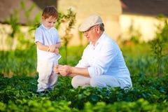 祖父解释给好奇孙子植物生长的本质 库存照片